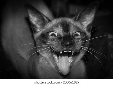 Cat Furious Face, with a little blur in Black and White