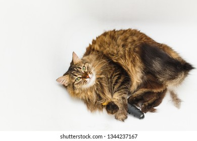 A cat with a furminator. White bathroom as background.