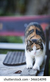 A cat in the garden.