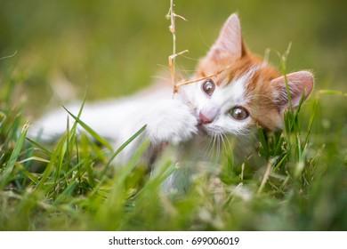 Cat in the garden