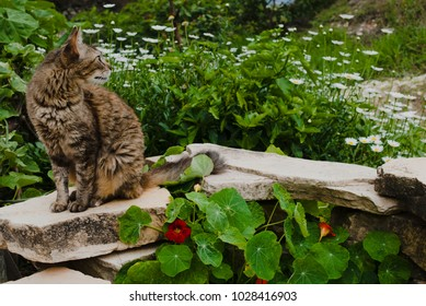 Cat in the garden in Brazil