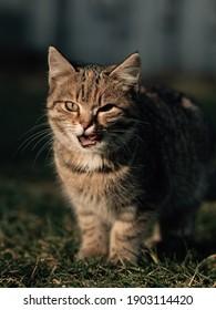 Cat in garden. Cute kitten outdoor.