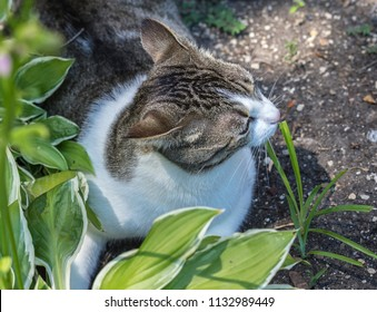 Cat in the garden - Lombard, Illinois, July 7, 2018