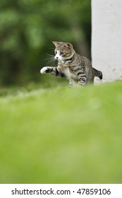 A Cat is getting to catch a Fly