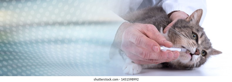 Cat getting medication at veterinary clinic; panoramic banner