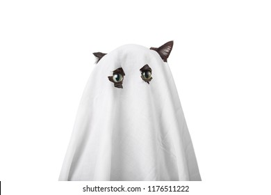 Cat in a ghost costume