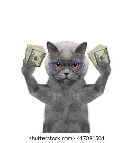 Cat in glasses holds in its paws a lot of money -- isolated on white background