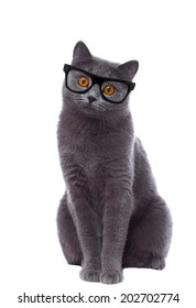 cat with glasses looking curiously isolated on white