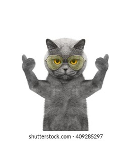 cat in glasses showing thumb up and welcomes -- Isolate on white background