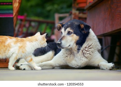 Cat goes to meet the dog