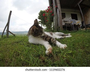 cat goming her