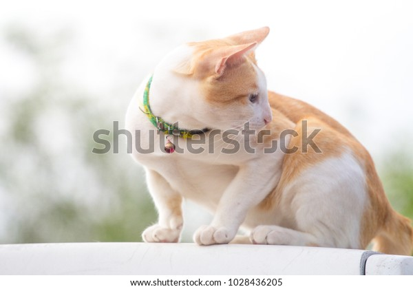 Cat Good Friend Man Turning Meaning Stock Photo (Edit Now