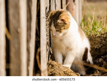 Cat in the grass. on background wooden texture