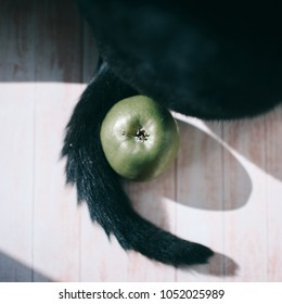 Cat and green apple