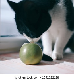 Cat and green apples. The cat sniffs the apples. Atmospheric photography