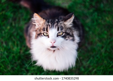 Cat with green eyes in blurry background.