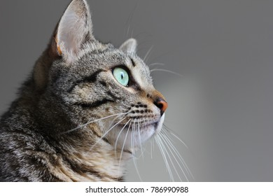 Cat with green eyes close up portrait