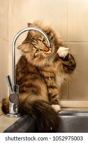 The cat with green eyes drinks water from a tap in the kitchen