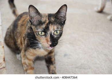 cat with green eyes looking at the camera