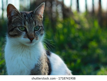 Cat with green eyes in nature.