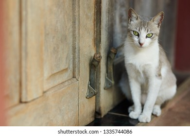 Cat with green eyes sit next to door close up view