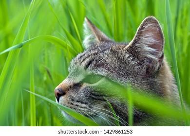 cat in green grass closeup