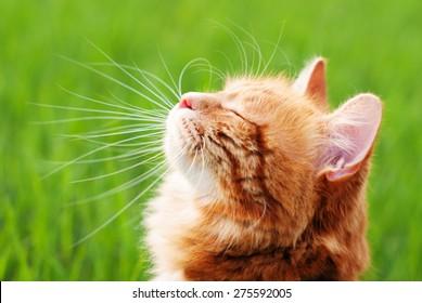 219.902 hình ảnh về con mèo vàng, kho ảnh tuyệt đẹp chất lượng cao nhất