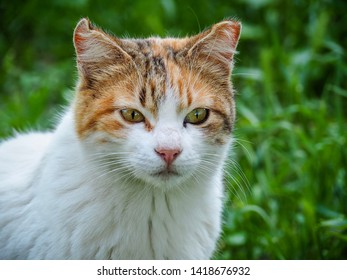Cat with green grasses as a background