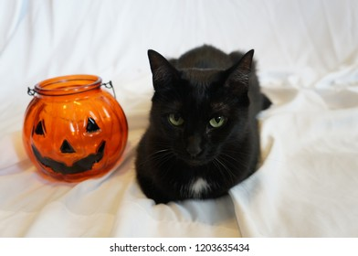 Cat And Halloween Pumpkin