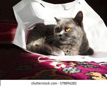 Cat with handbag