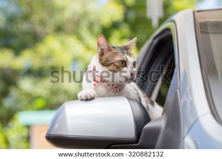 Cat Happy With Her Head Out Of A Car Window