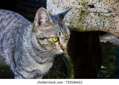 Cat has yellow eyes