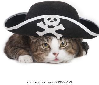 Cat in the Hat Pirate on a white background in studio