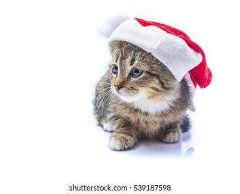 cat in the hat of Santa Claus