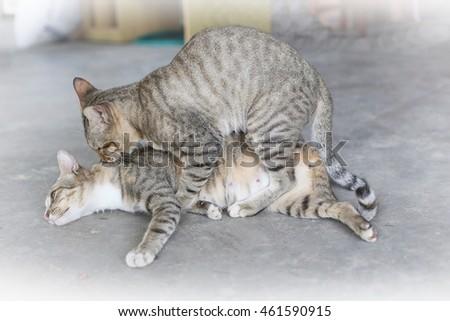 Кошек с секс
