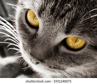 Cat. Head close-up. Bright yellow eyes.