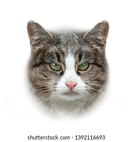 cat head isolated on white background
