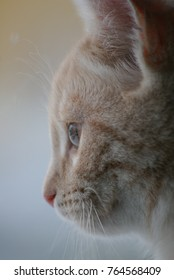 Cat head in profile