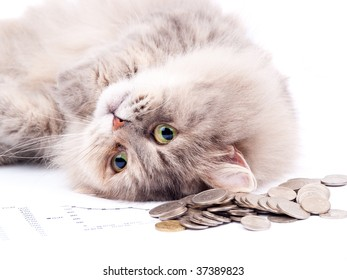 Cat and heap of coins against white