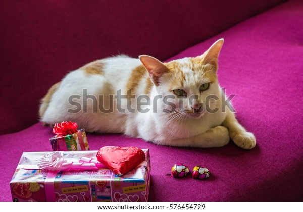 cat and Heart Chocolate and candy selective focus, Valentine Day concept.