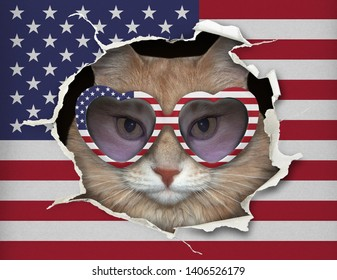The cat in heart shaped sunglasses is looking through hole in the paper USA flag.