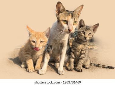 cat with her two kitten