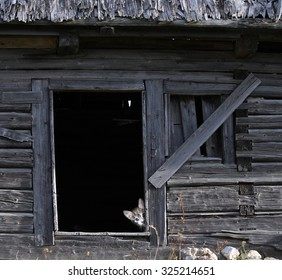 Cat hidden in a wooden rustic barn