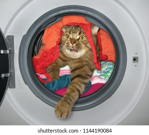 The cat is hiding amongst dirty laundry inside the washing machine.