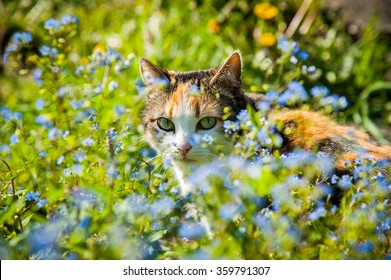 A cat is hiding behind flowers