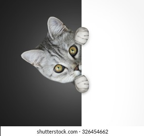 cat hiding behind poster
