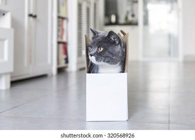 The cat hiding in cardboard box