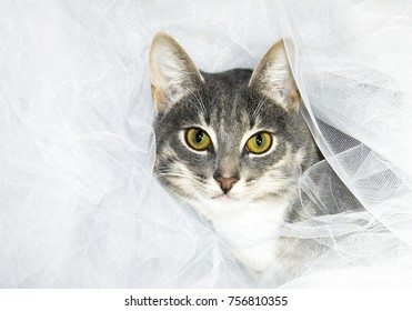 cat hiding in cloth