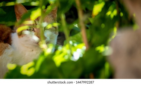 Cat hiding in green undergrowth looking through leaves dappled with sunshine