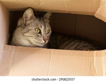 Cat hiding in paper box, curious kitten in the box. A cat plays hide and seek in a cardboard box. A cat plays and hiding in a cardboard box